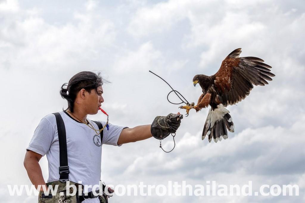 birdcontrolthailand