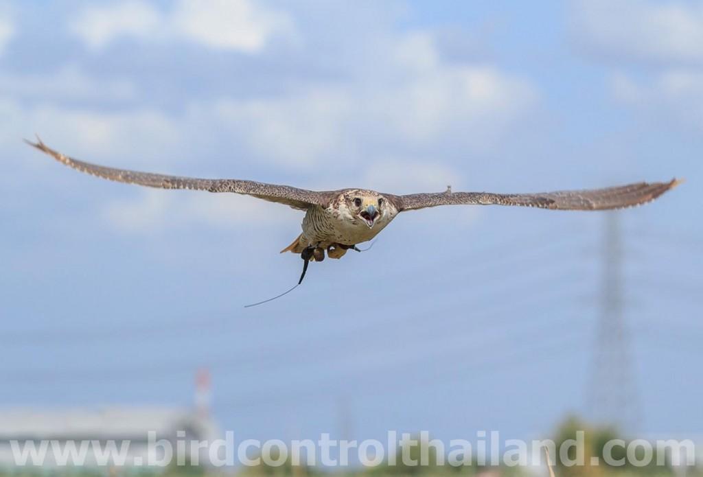 birdcontrolthailand-2